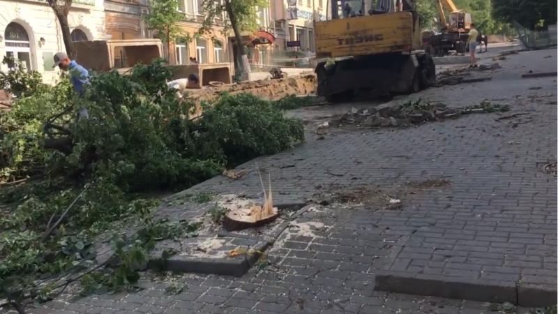 На улице Московской уничтожают деревья. У властей – выходной